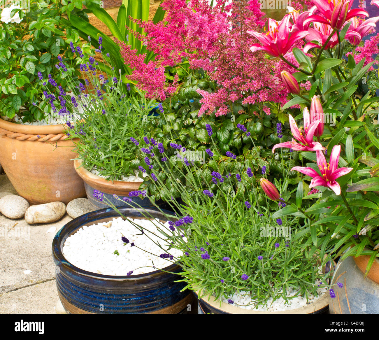 Pots And Containers In The Corner Of A Patio With Roses, Lavender, Lilies  And Astilbe