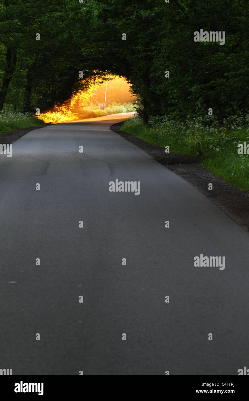 forest-edge-asphalt-road-and-bright-gold