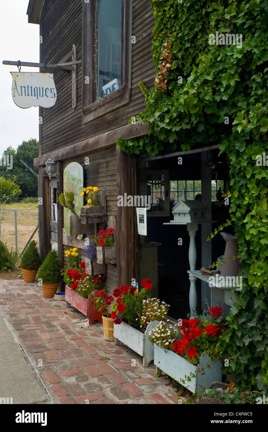 California san mateo county pescadero - Ivy Covered Antique Shop In Downtown Pescadero San Mateo County California