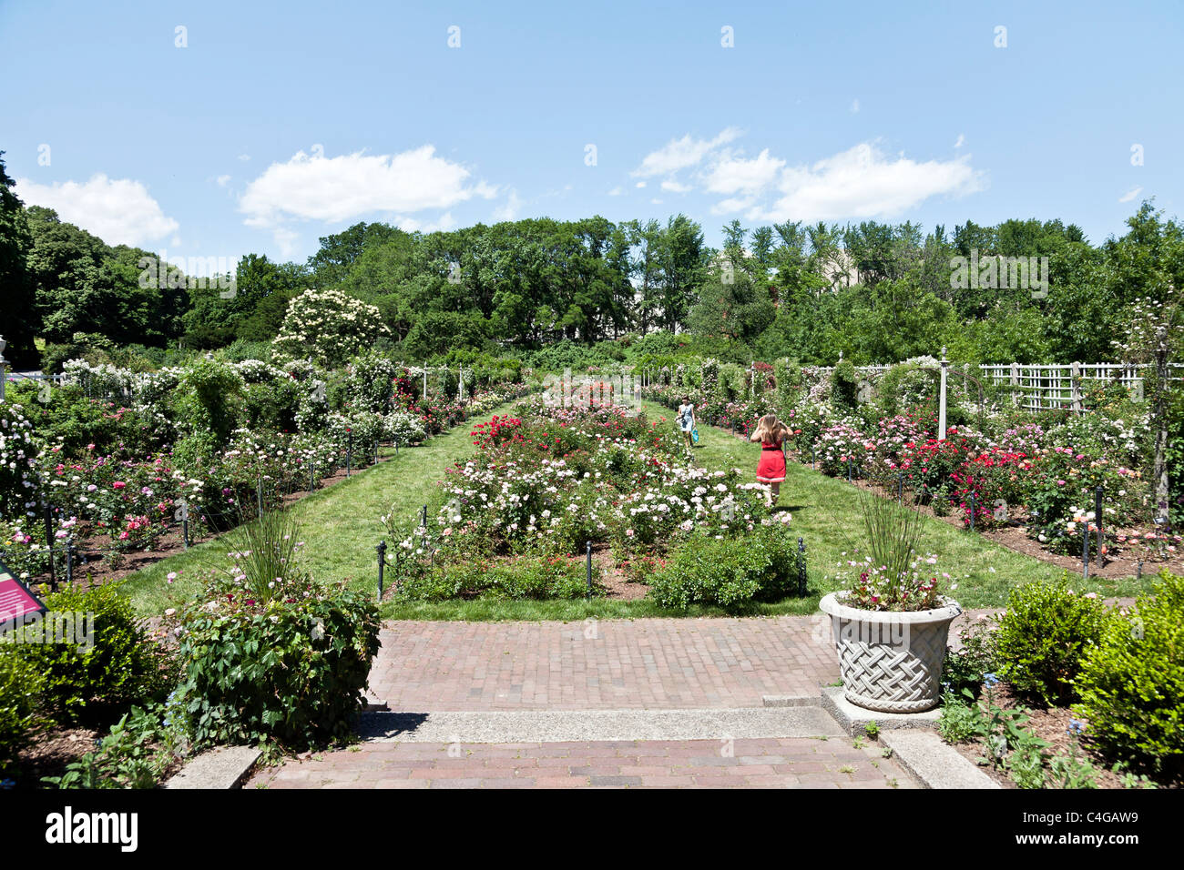 Cranford Rose Garden At Brooklyn Botanic Garden On A Beautiful Spring Stock Photo Royalty Free