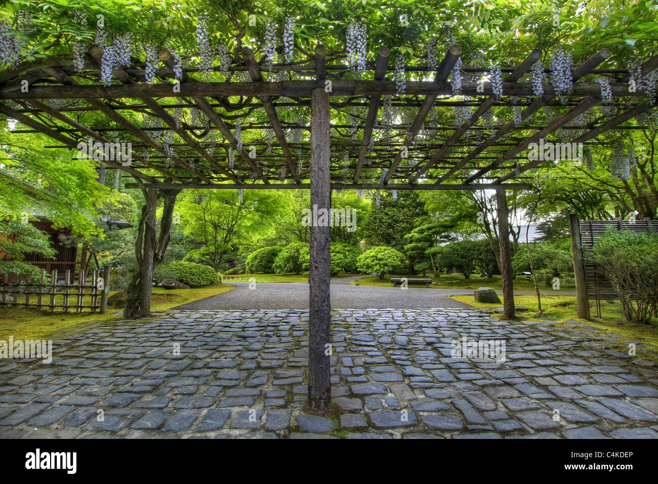 Wisteria Flowers In Bloom On Pergola At Portland Japanese Garden Stone Path