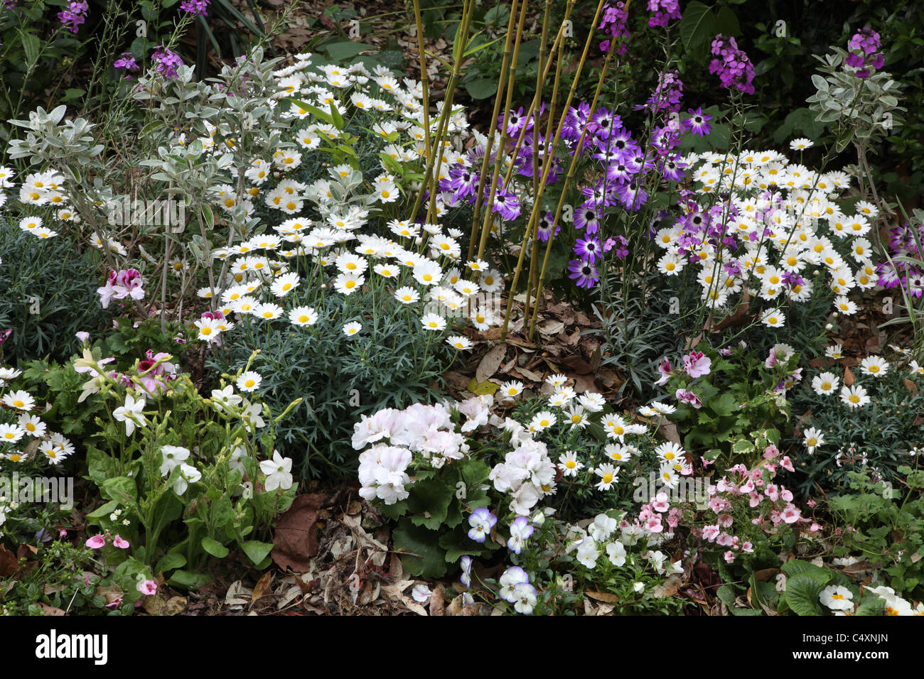 Flower bed at RHS Chelsea Flower Show London 2011 Stock Royalty Free