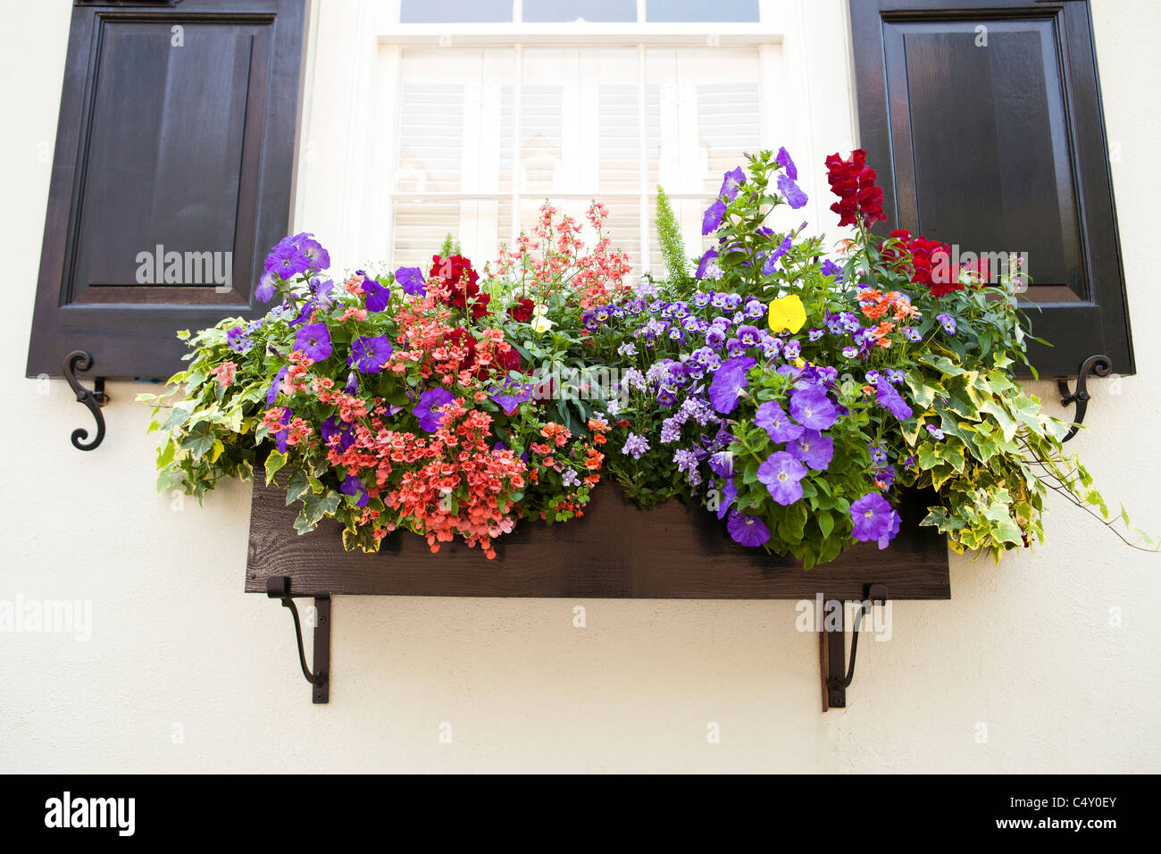 photos of flowers in window boxes