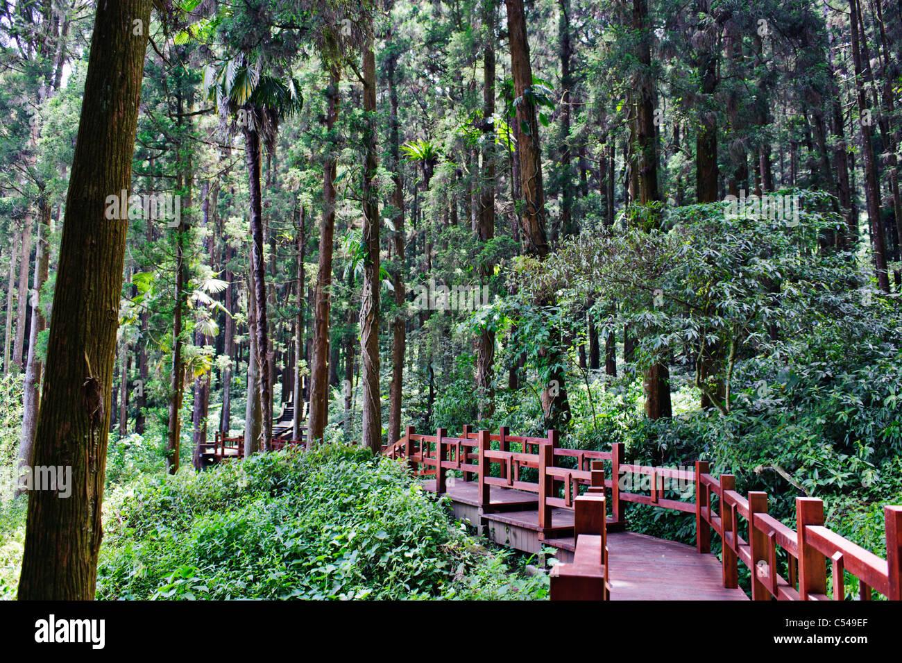 Yangmingshan National Park Alishan National Park,...