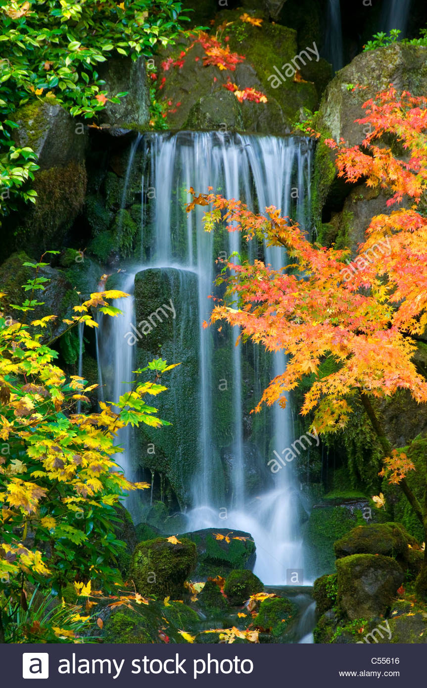 Waterfall In A Forest Heavenly Waterfall Lower Pond Portland Stock Photo Royalty Free Image