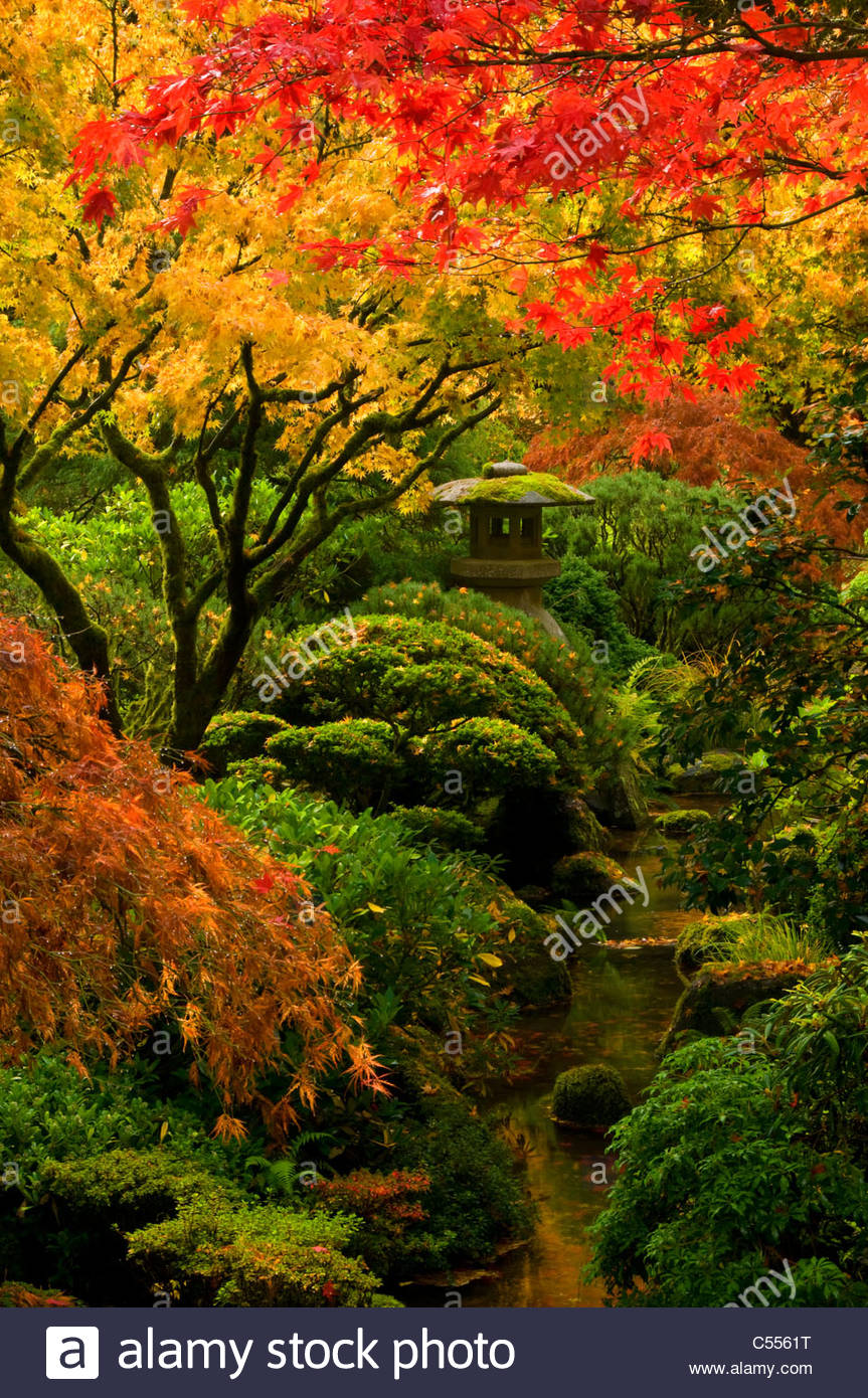 Trees In A Garden Strolling Pond Garden Portland Japanese Garden Stock Photo Royalty Free