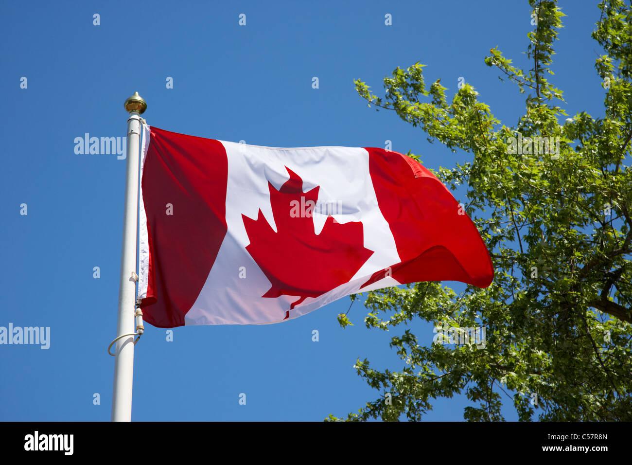 canadian maple leaf flag flying stock photo royalty free image