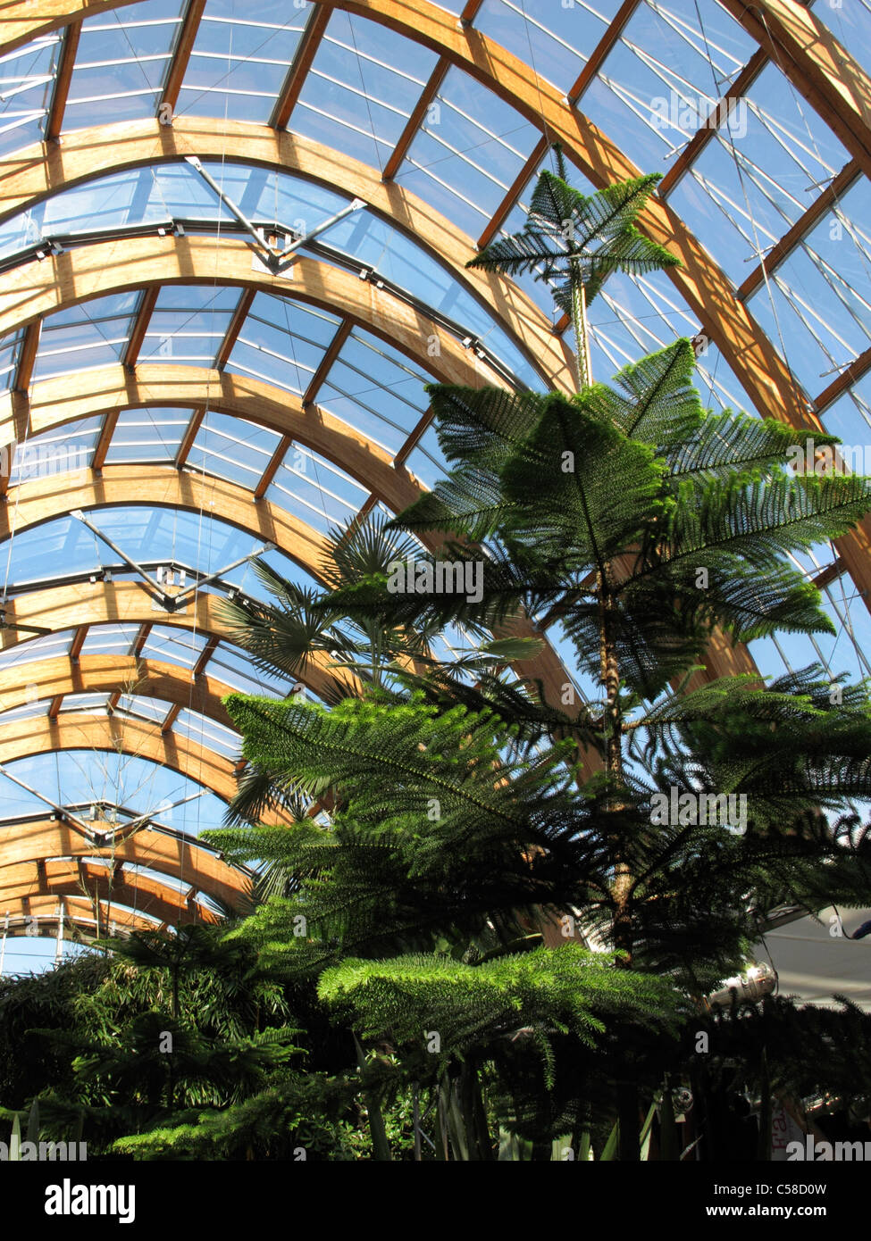 Roof Structure Of Sheffield Winter Garden South Yorkshire