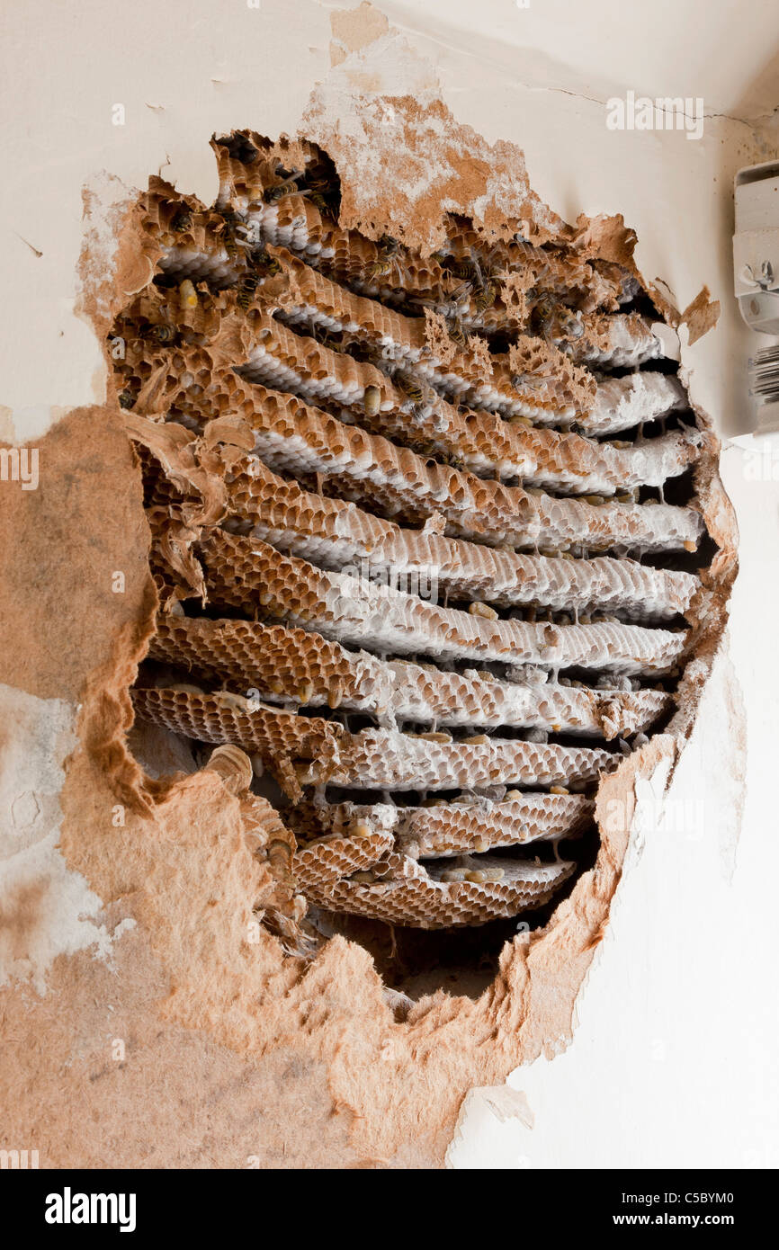 Wasp Nest In Window Frame Page 4 Frame Design Amp Reviews