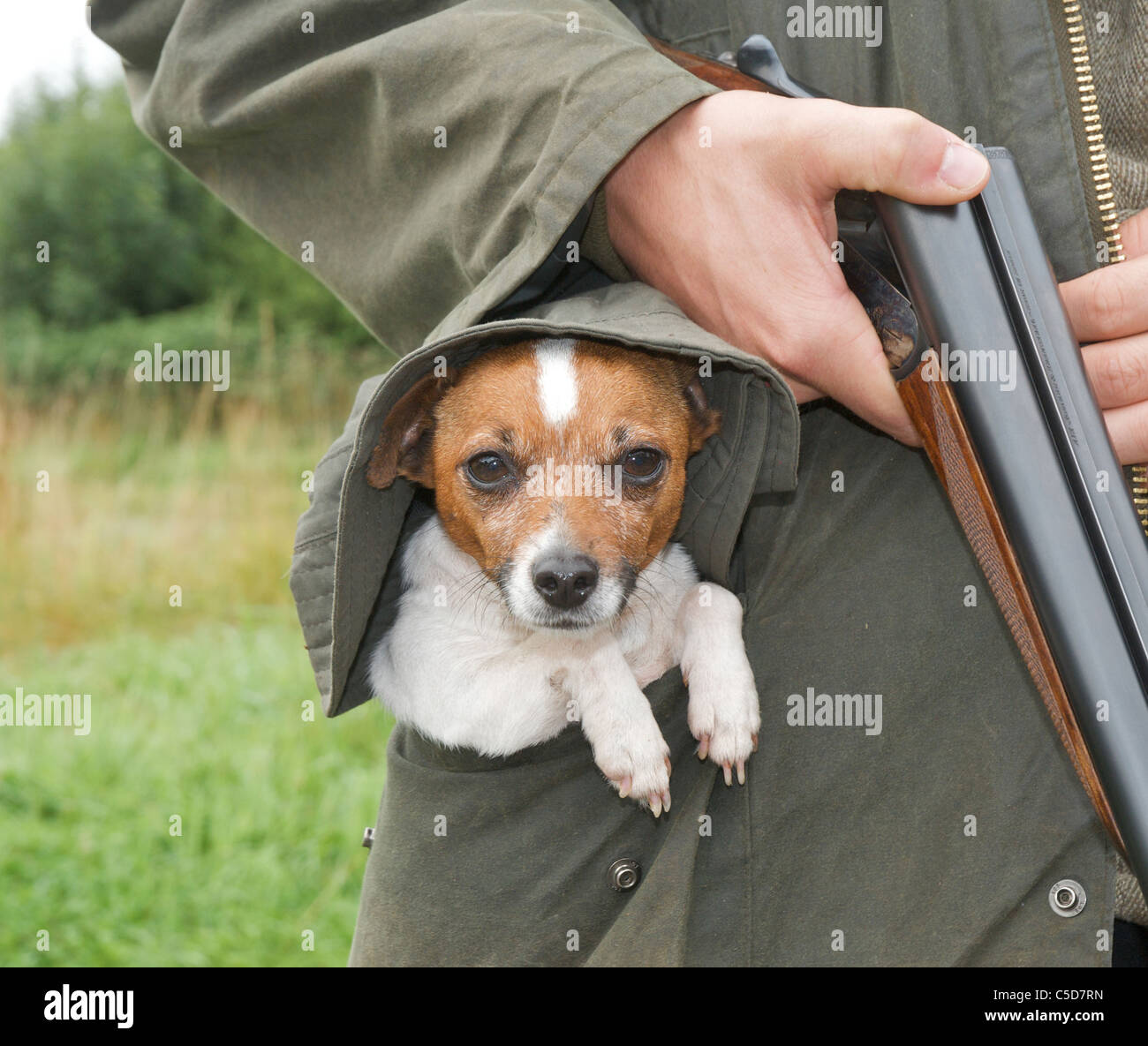 Pocket beagle size