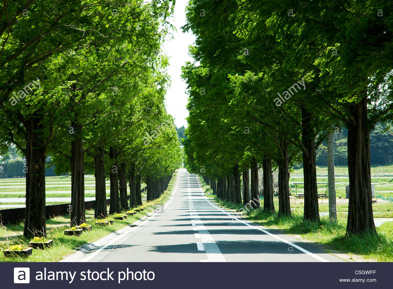 Straight Road Roadside Stock Photos  for Straight Road With Trees  45ifm