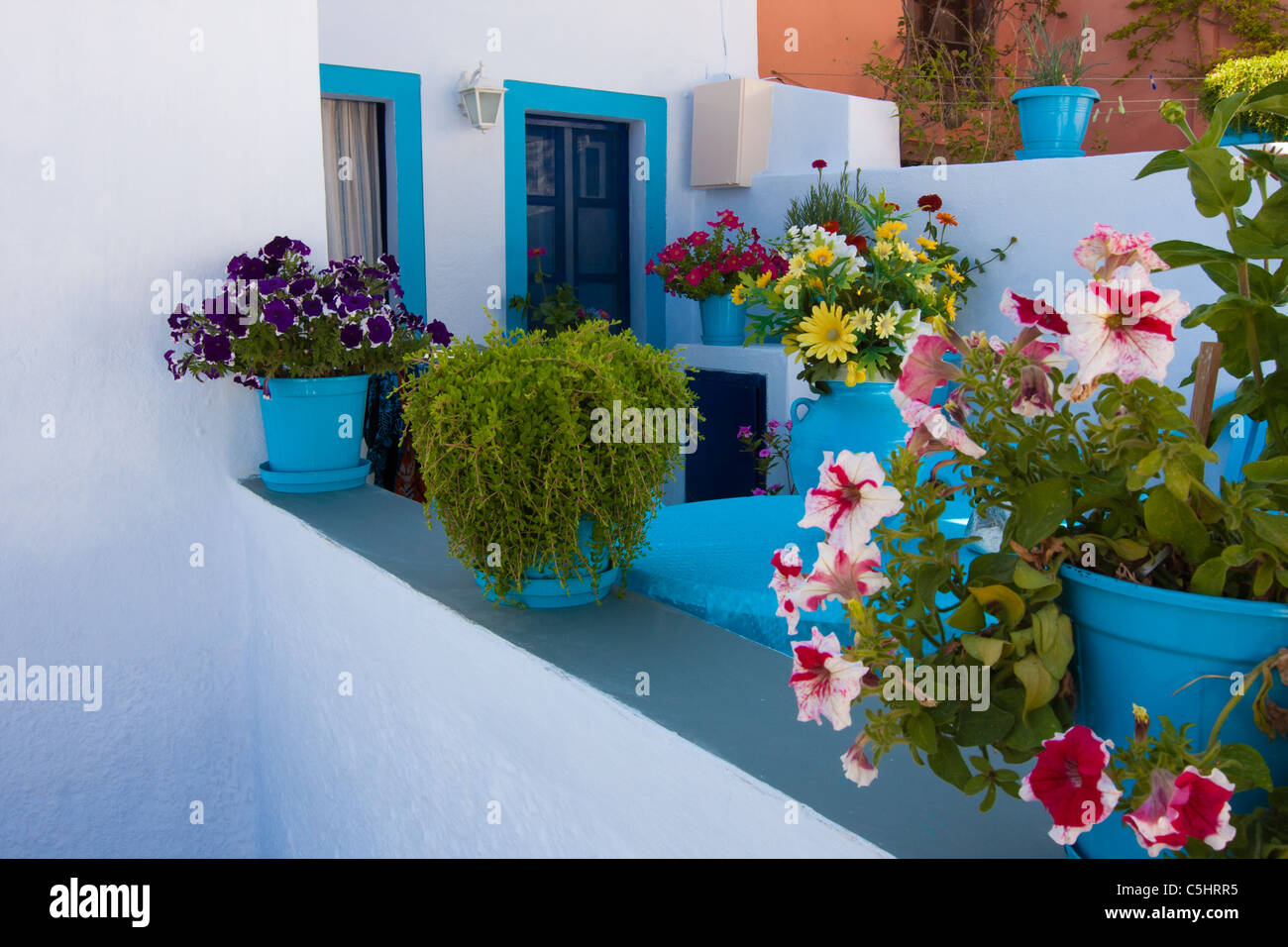 blue flower pots with petunia flowers in front of private colorful