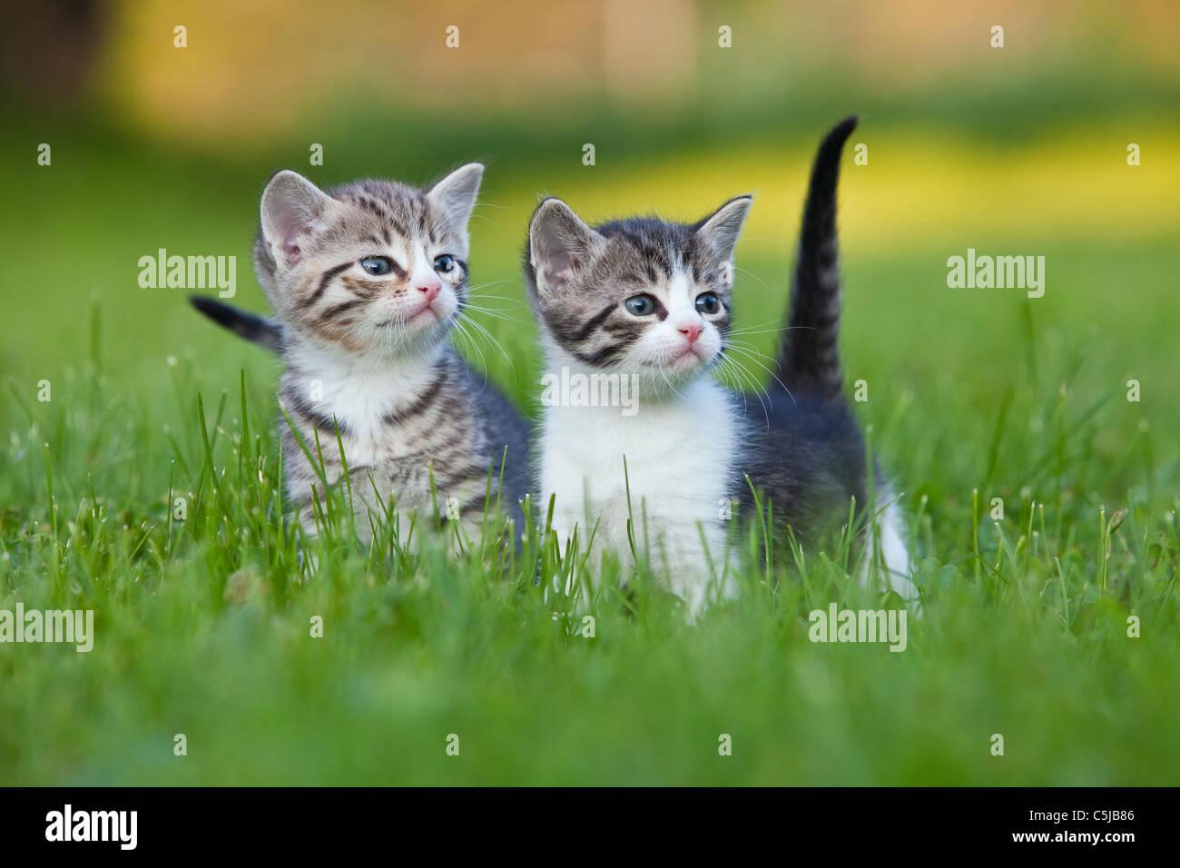 lovely kitten kitties Stock Royalty Free Image