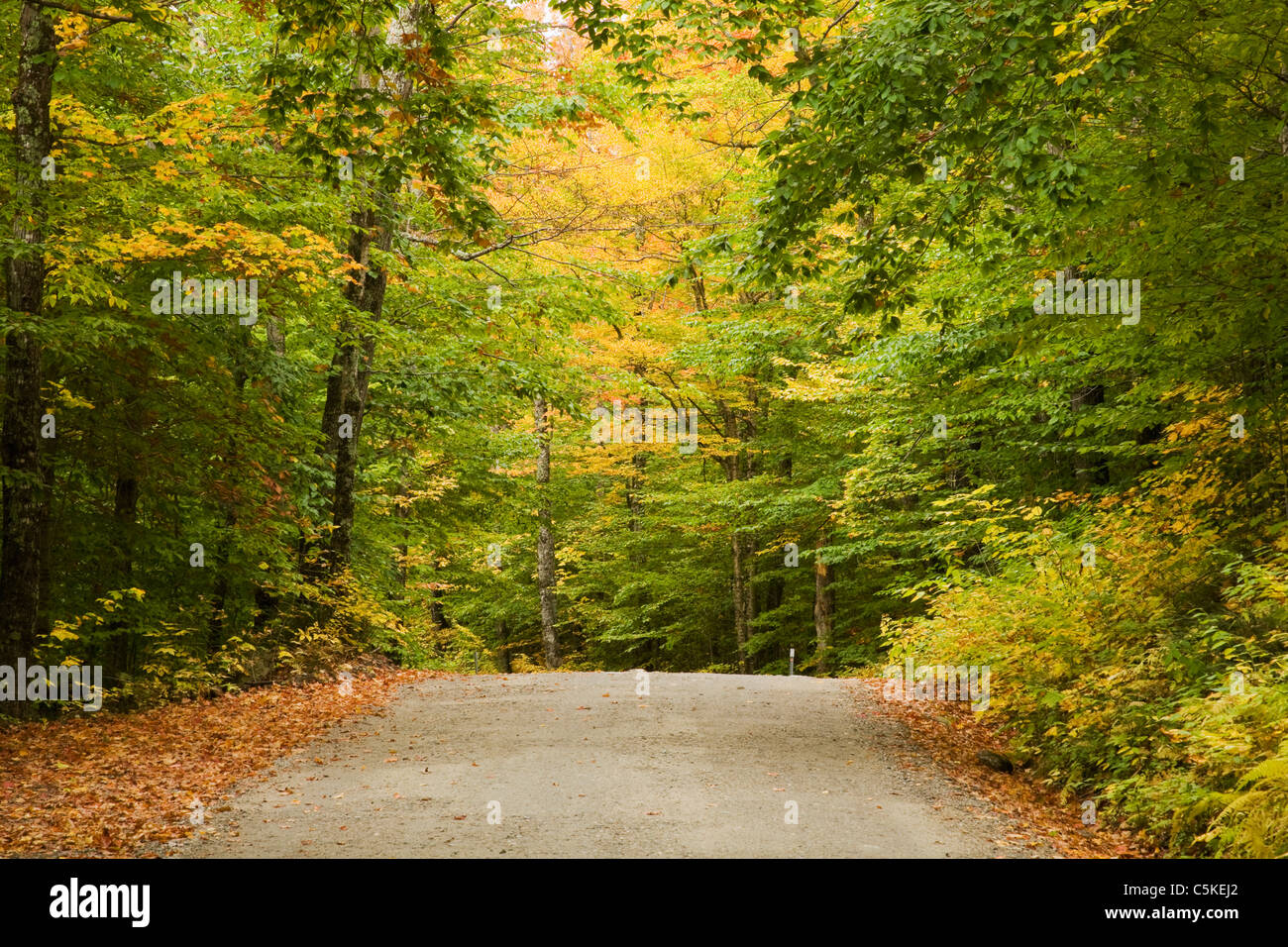 A back road through fall colored trees Stock Photo, Royalty Free ...