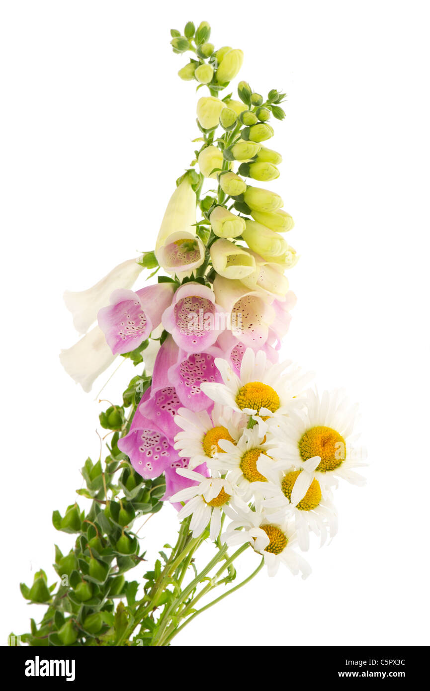 Wild flowers as purple foxglove flowers and daisies isolated over wild flowers as purple foxglove flowers and daisies isolated over white background izmirmasajfo Image collections