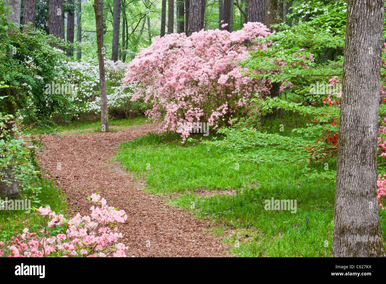 callaway gardens in georgia. Azalea Overlook Garden At Callaway Gardens In Pine Mountain, Georgia E