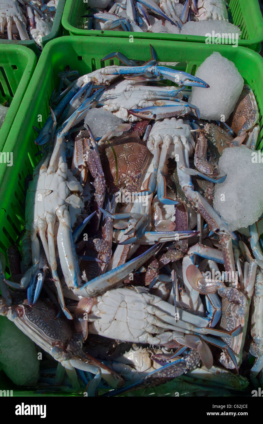 how to open a blue swimmer crab