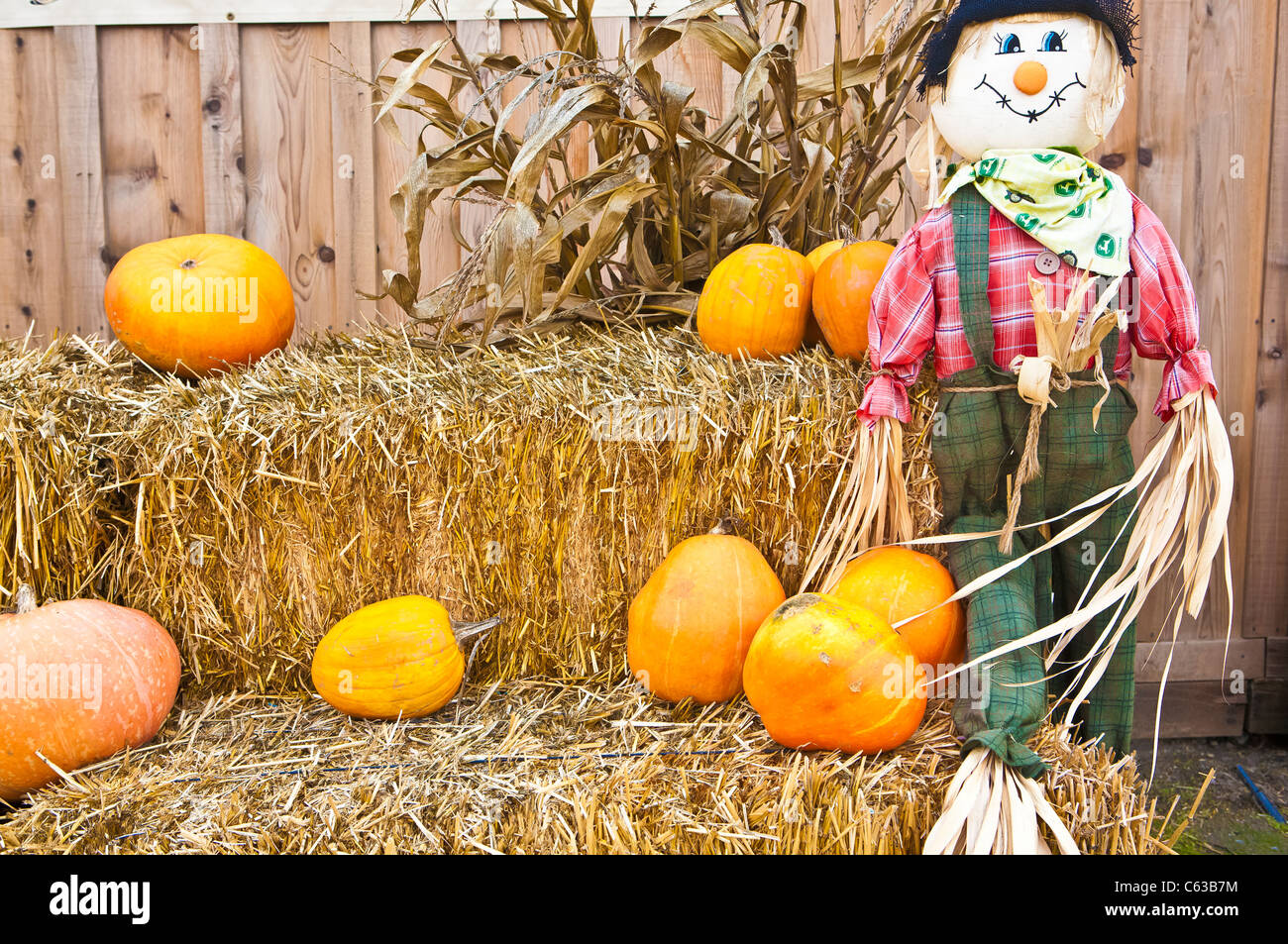 stock photo halloween scarecrow and pumpkins on straw with corn stalks - Halloween Corn Stalks