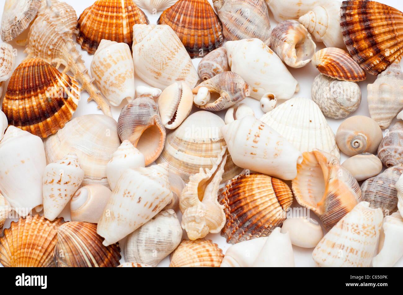 background of assorted seashells stock photo royalty free image