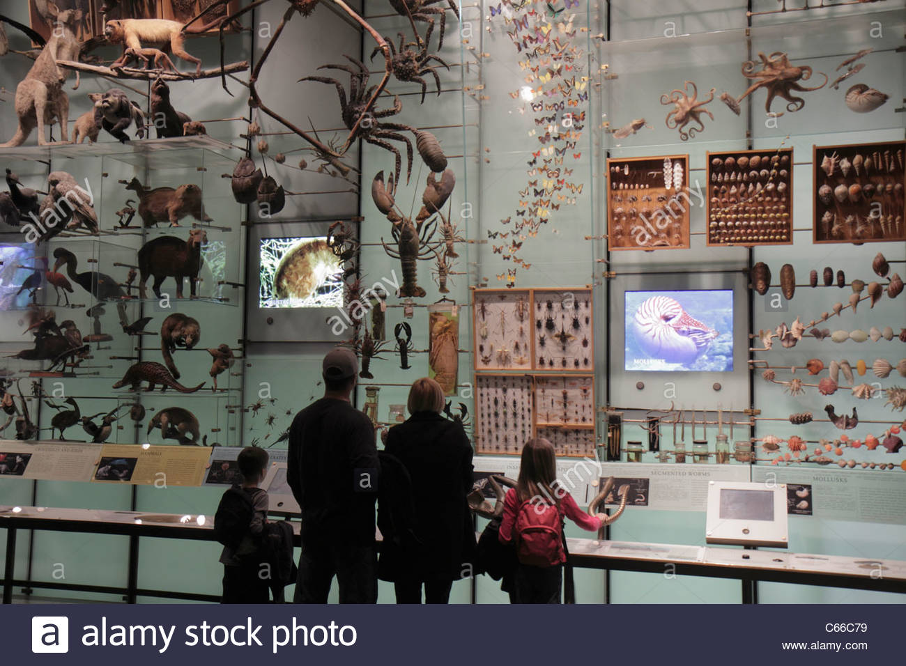 Natural Science Museum New York Free