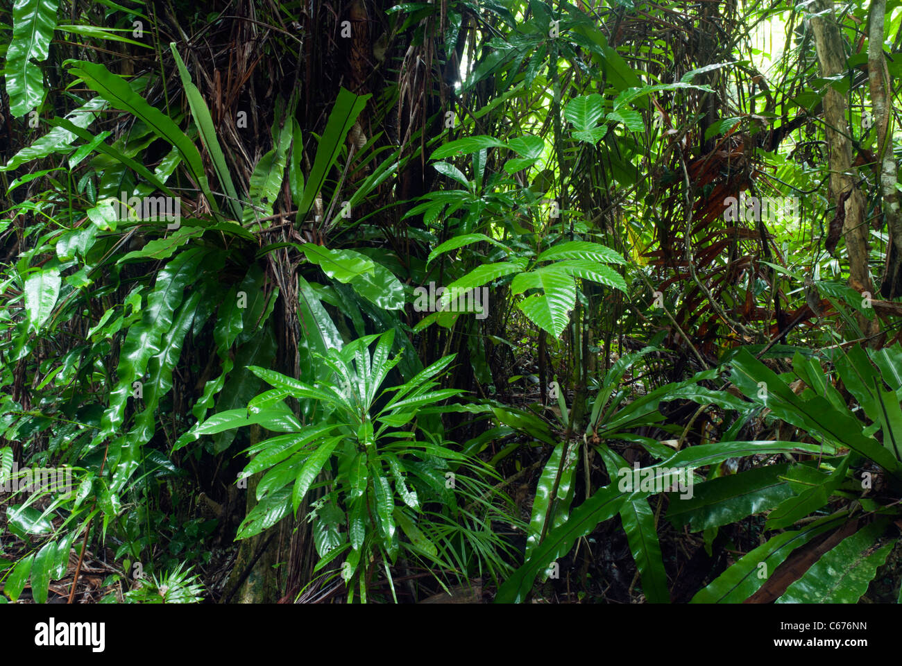Tropical Rainforest Biome Location Temperature
