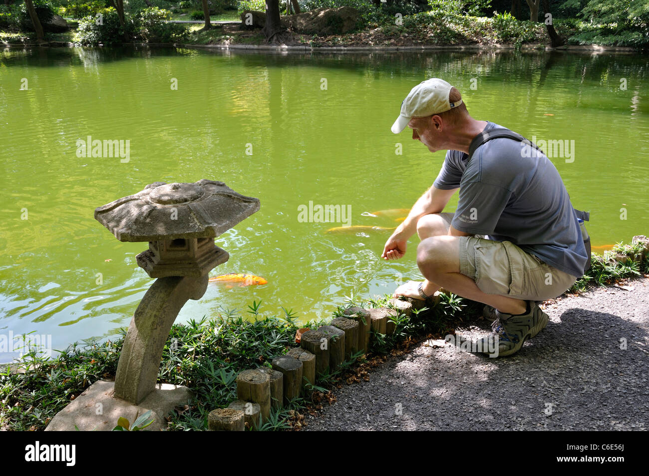 Japanese garden fort worth texas usa man feeding koi for How much are koi fish worth