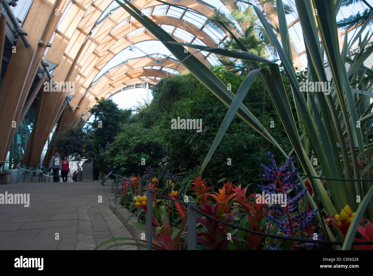 plants growing in winter gardens sheffield uk daytime interior
