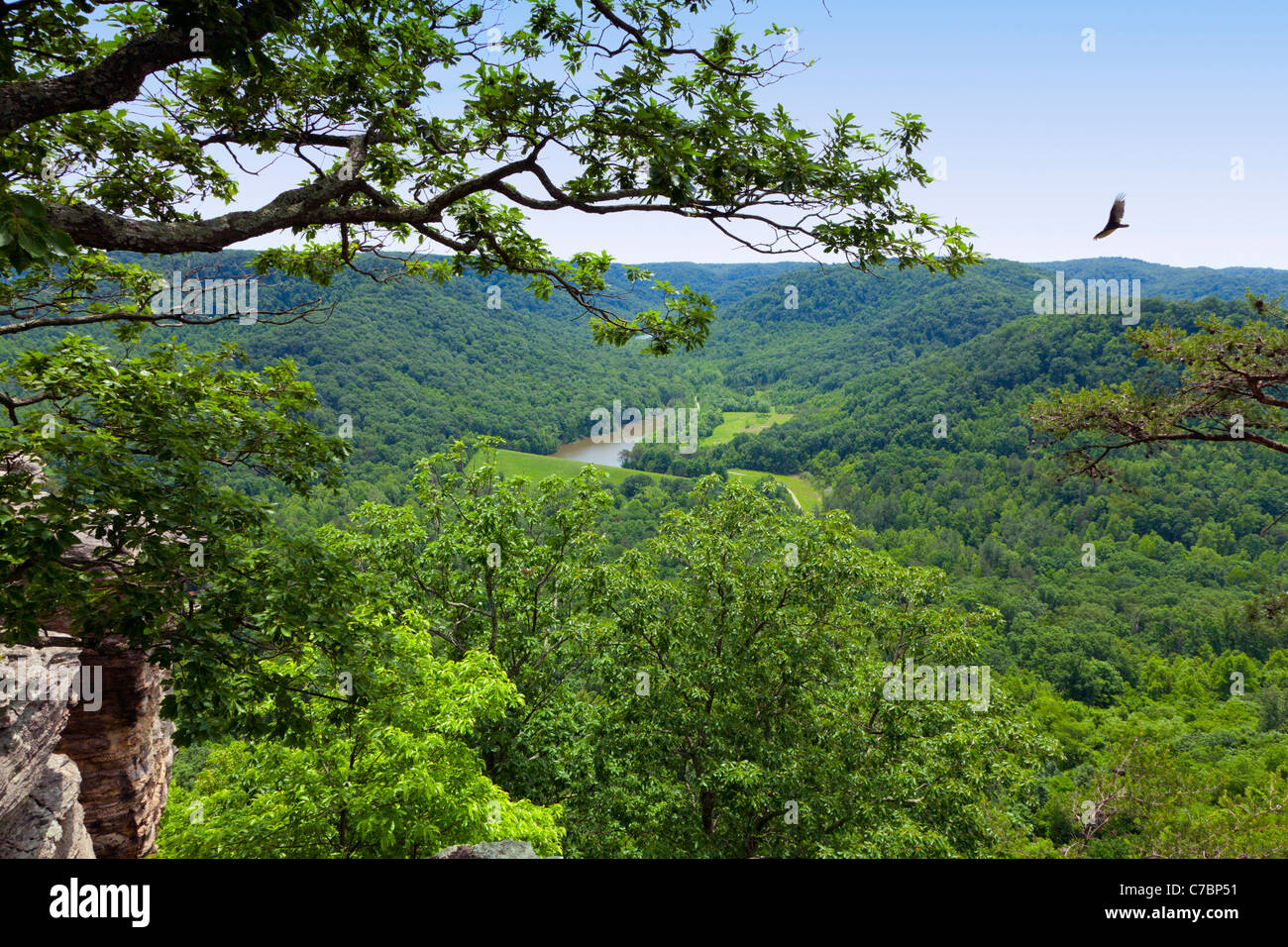 Landscaping Rock Berea Ky : Berea forest in kentucky stock photo royalty free image