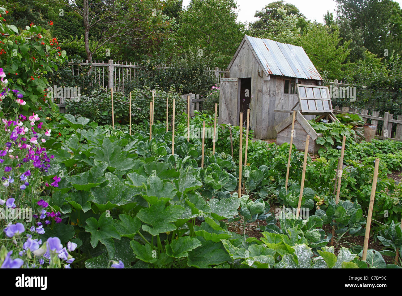 An Allotment Shed In Vegetable Garden At The Royal