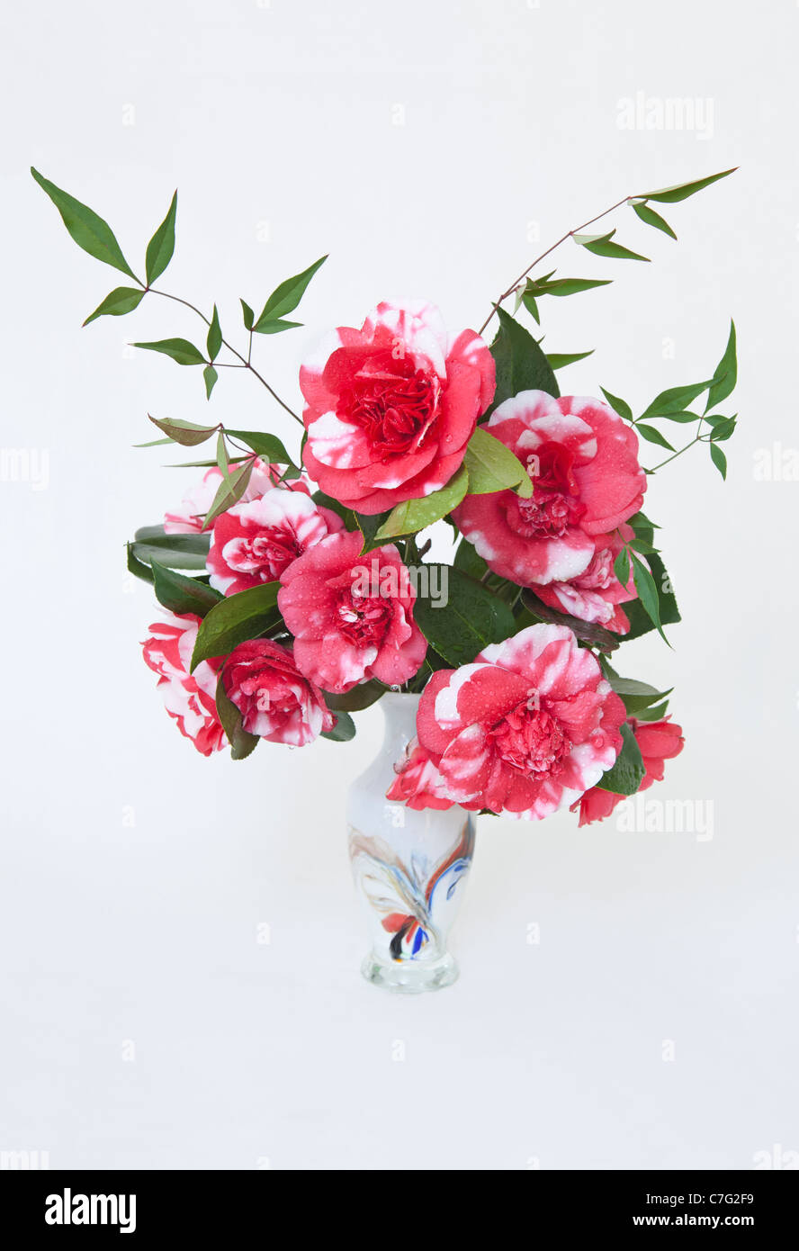 Hot pink and white miniature camellias in decorated glass vase hot pink and white miniature camellias in decorated glass vase reviewsmspy