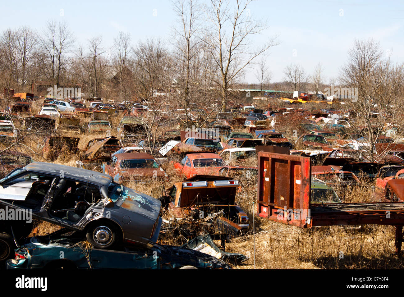 Old junkyard filled with classic cars and overgrown vegetation ...