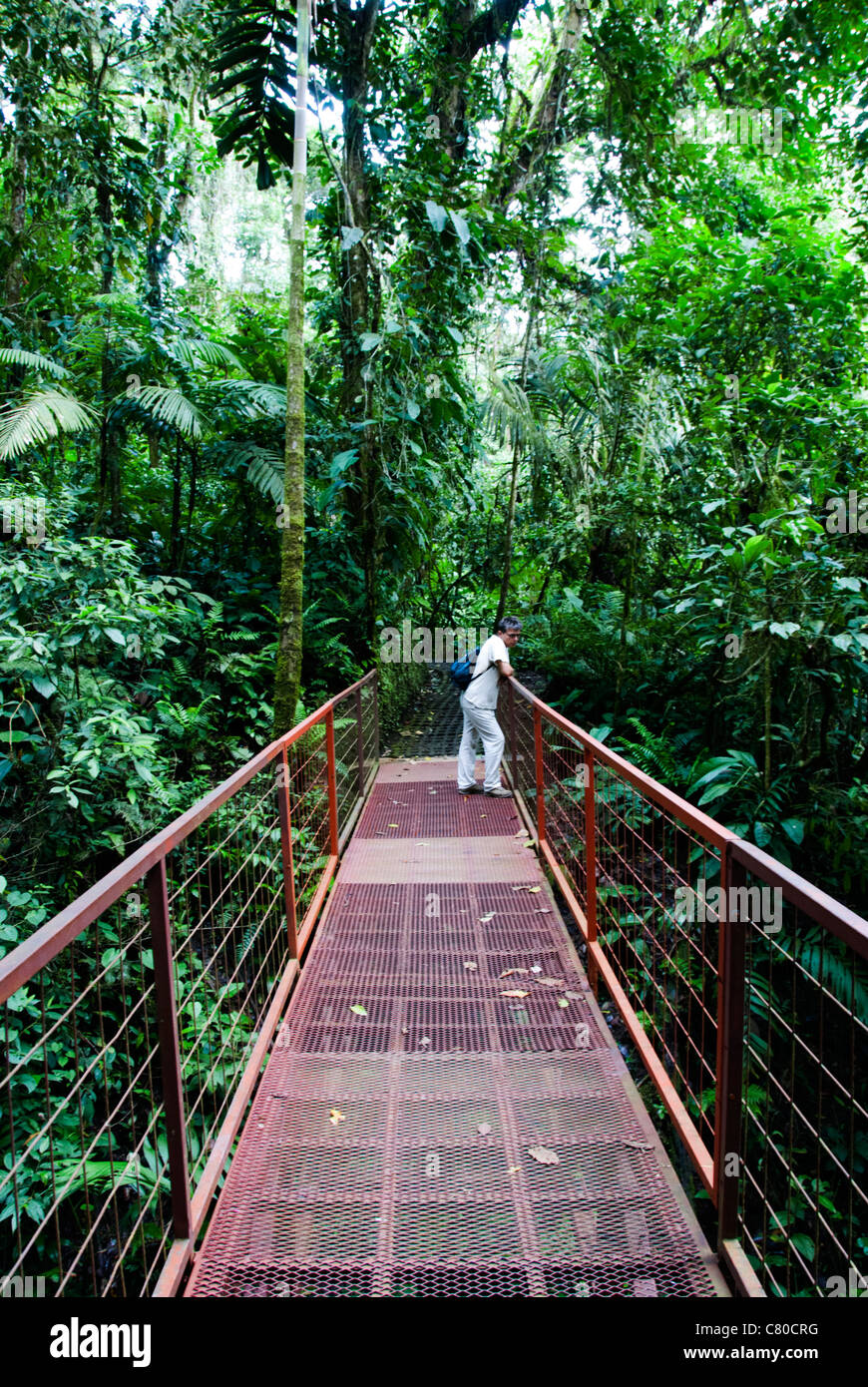 Arenal hanging bridge park rain forest protected areaclose to Arenal Volcano National Park . Costa Rica. Central America & Arenal hanging bridge park rain forest protected areaclose to ...