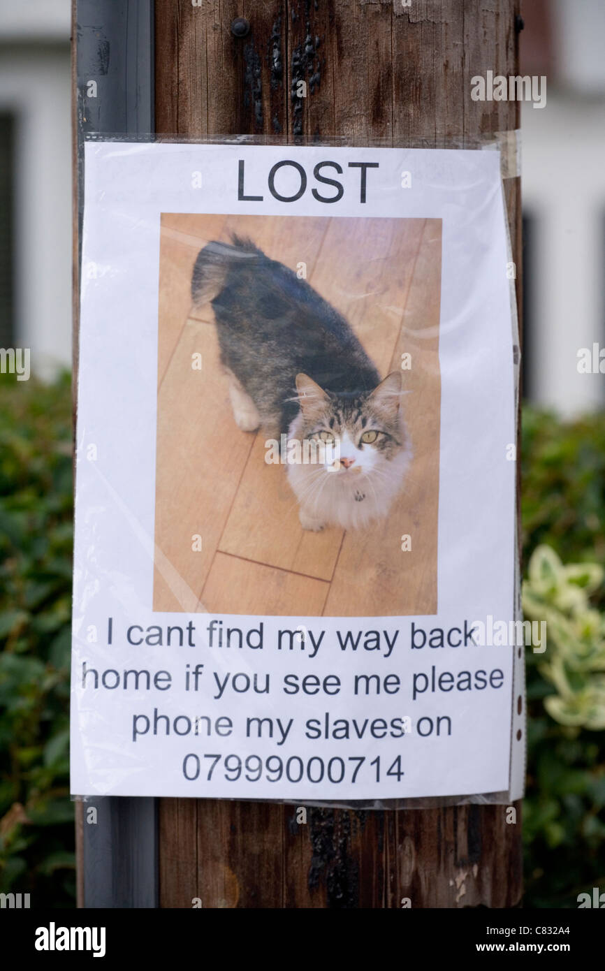 Lost Pet Poster Of Cat On A Lamp Post UK  Lost Pet Poster