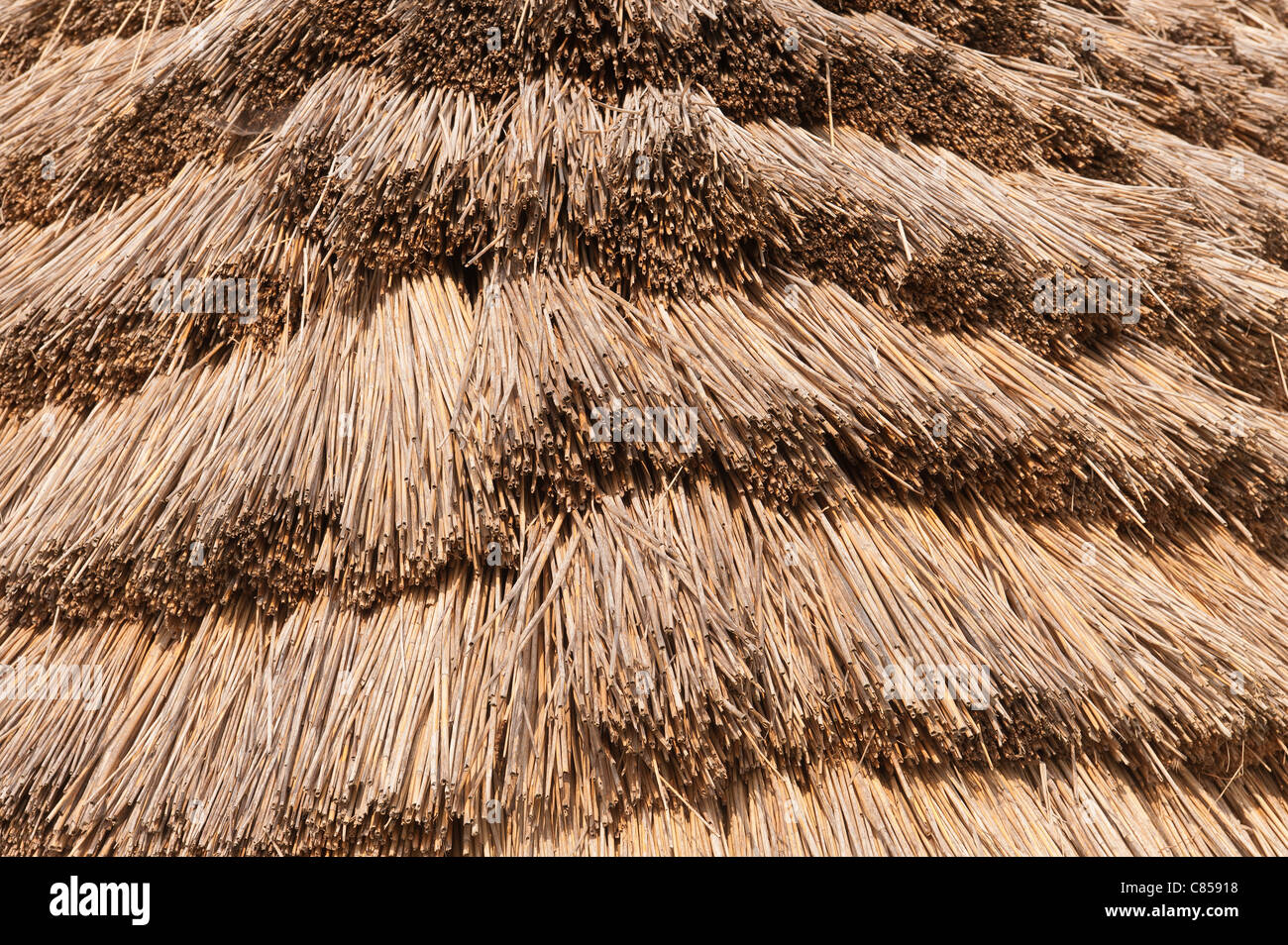 Stock Photo   Thatched Roof And Bronze Age Style Dwelling With Timber And  Mud Walls Reed With Straw Roof