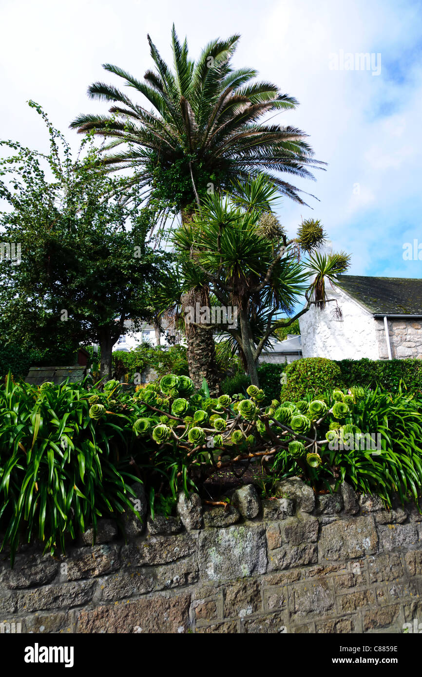 Palm Tree And Succulents Growing In Garden Hugh Town St