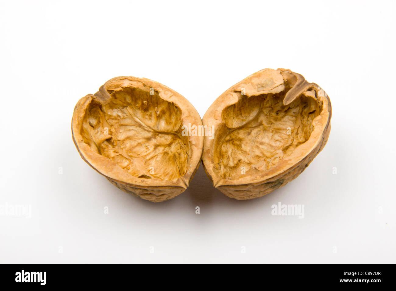 Empty walnut shell
