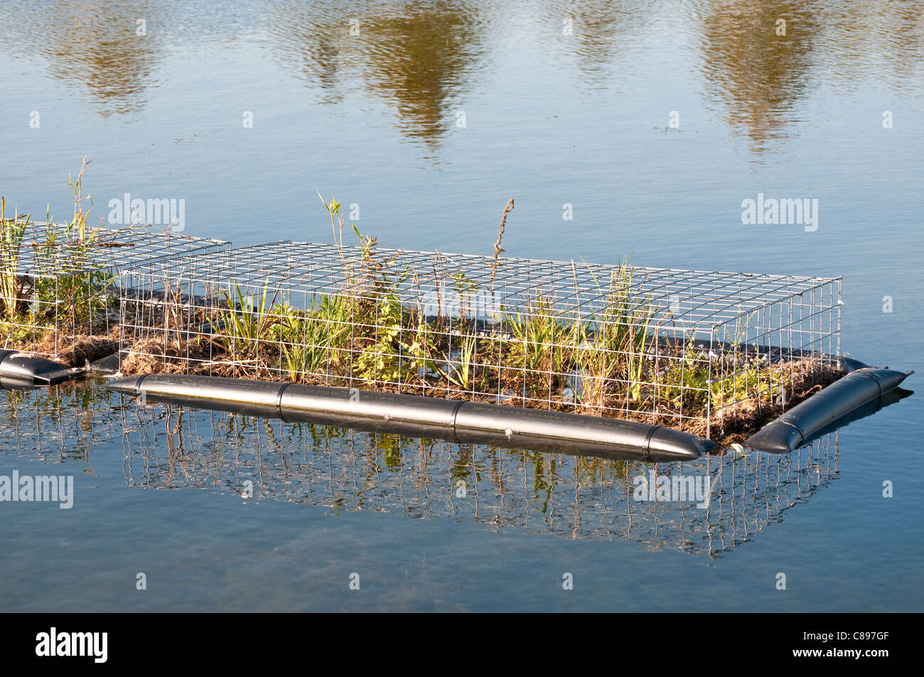 Floating Plants Protected By Chicken Wire On Long Water Home Park Surrey England United Kingdom