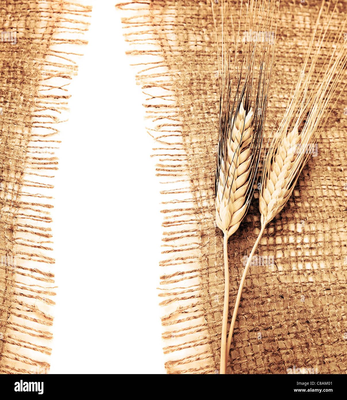 harvest border