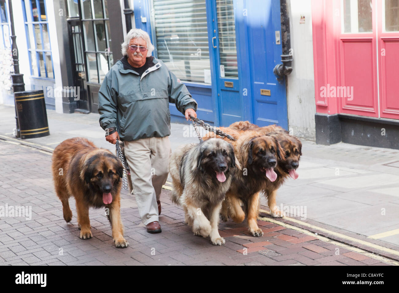 Where To Buy A Dog In London Uk