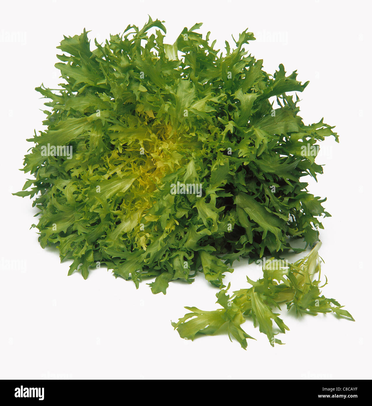 Escarole lettuce Stock Photo, Royalty Free Image: 39610019 ...