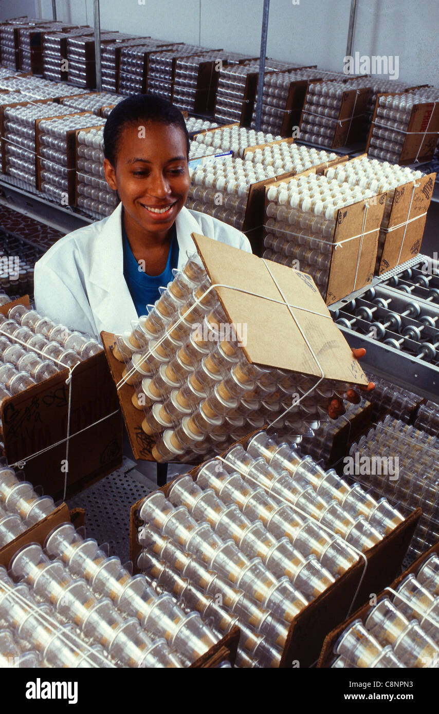 Research apprentice Sherri Day inspects development of corn ...