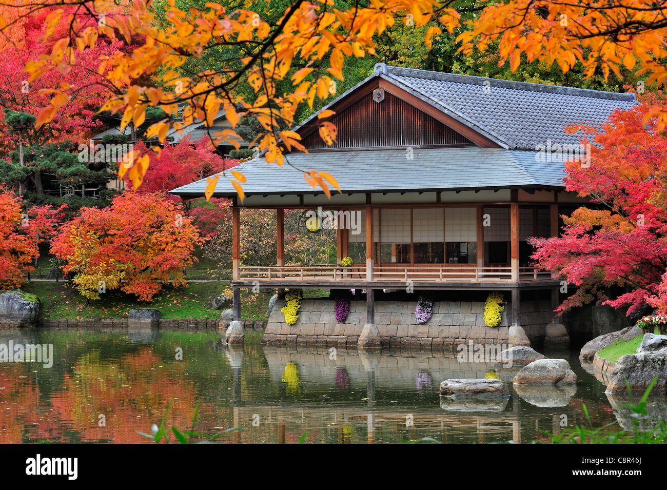 Traditional japanese gardens - Stock Photo Traditional Pavilion Tea House In Japanese Garden With Tree Foliage In Red Autumn Colours In The City Hasselt Belgium