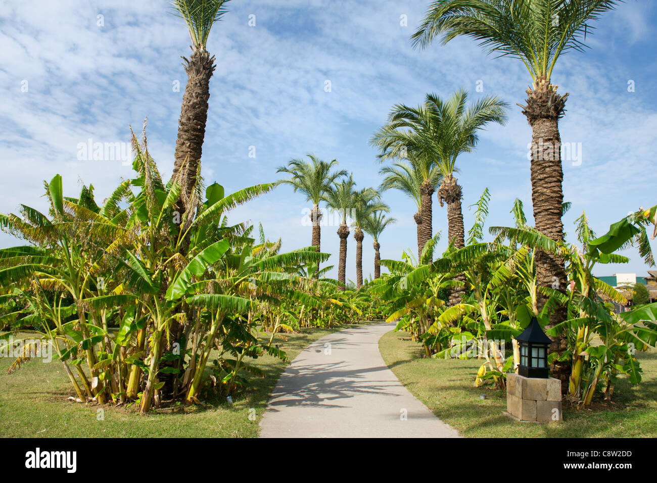 Tropical garden with palm trees and banana trees Stock Photo