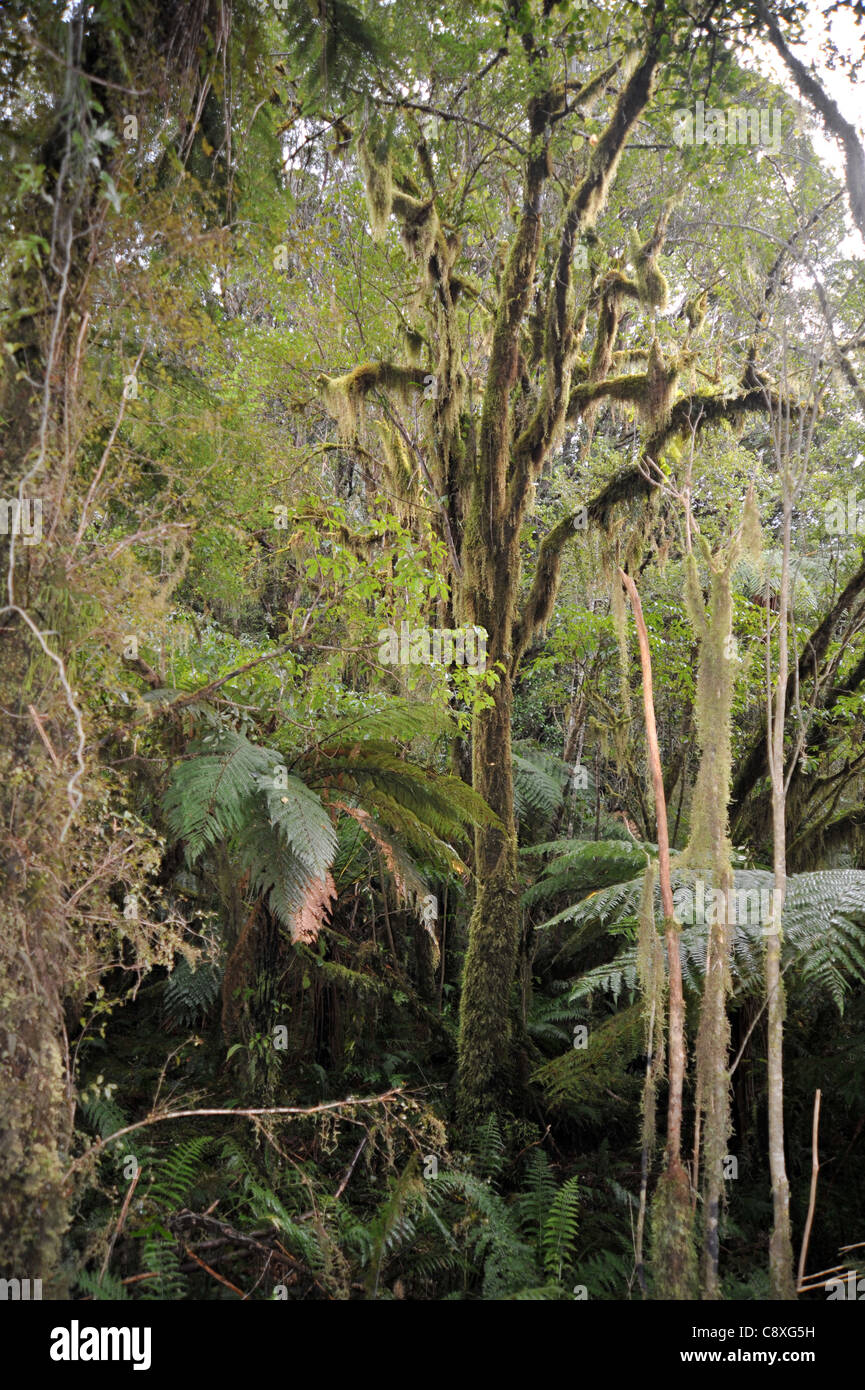 Below the canopy of New Zealandu0027s temperate rainforests a mystical jungle like environment exists & Below the canopy of New Zealandu0027s temperate rainforests a mystical ...