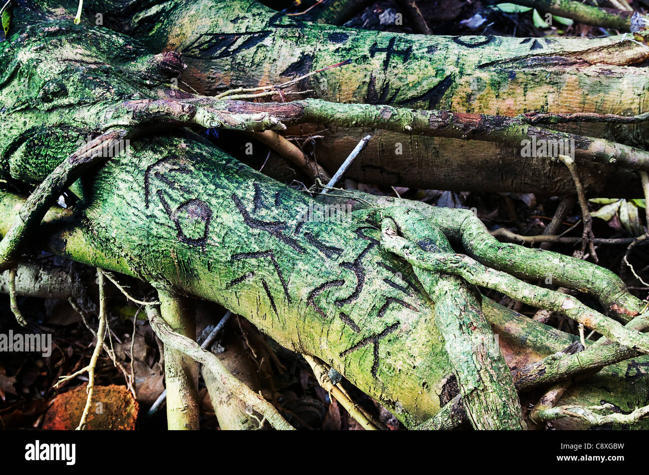 Witchcraft symbols stock photo royalty free image 39921613 alamy witchcraft symbols buycottarizona