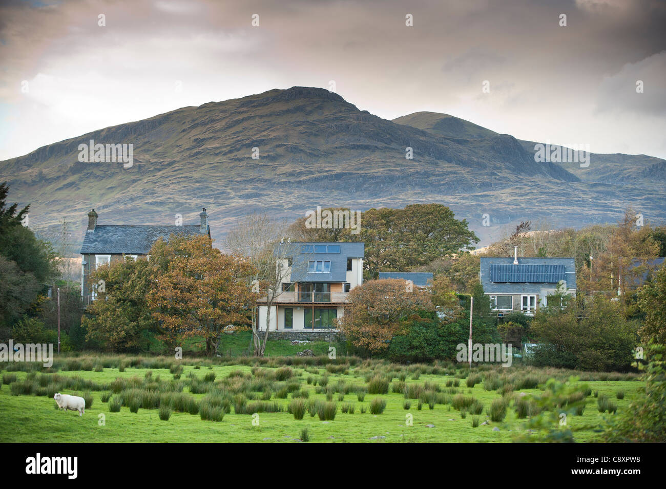 Moelwyn Bach And Moelwyn Mawr Mountains Behind Houses In