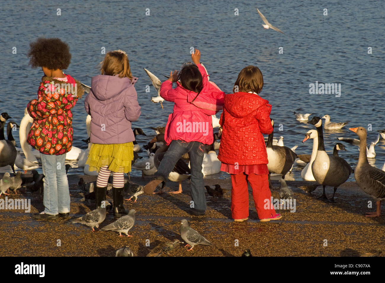 Seductive Multicultural Children Uk Stock Photos  Multicultural Children Uk  With Foxy Young Girls Feeding Birds Round Pond Kensington Gardens Hyde Park  London  With Appealing Zeppole Olive Garden Also Garden Fence Rules In Addition Ribbon Embroidery Flower Garden And Small Garden Design As Well As Activity Garden Play Centre Additionally Globe Garden Lights From Alamycom With   Foxy Multicultural Children Uk Stock Photos  Multicultural Children Uk  With Appealing Young Girls Feeding Birds Round Pond Kensington Gardens Hyde Park  London  And Seductive Zeppole Olive Garden Also Garden Fence Rules In Addition Ribbon Embroidery Flower Garden From Alamycom