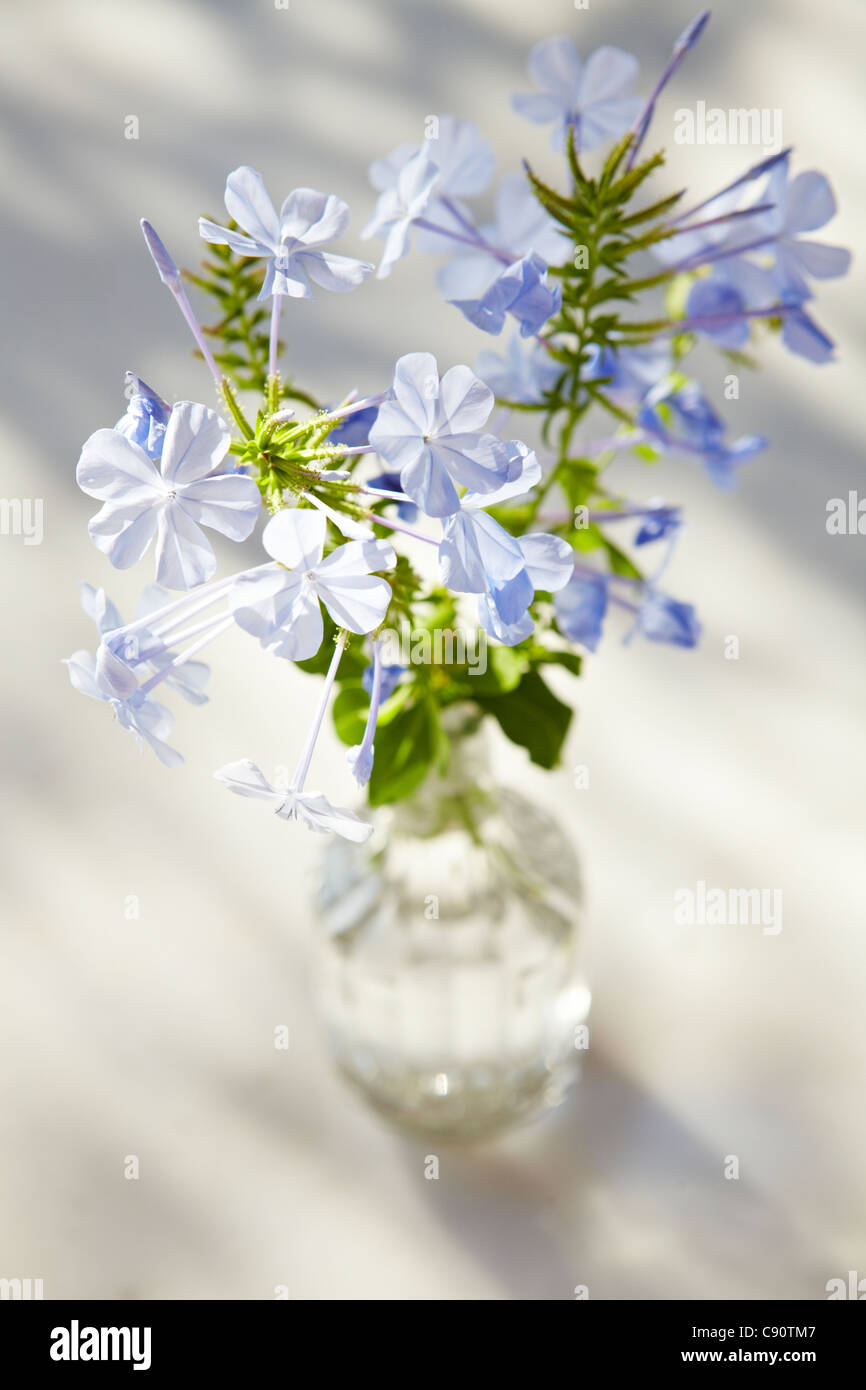 Blue wild flowers in a glass vase on a marble table top stock blue wild flowers in a glass vase on a marble table top reviewsmspy