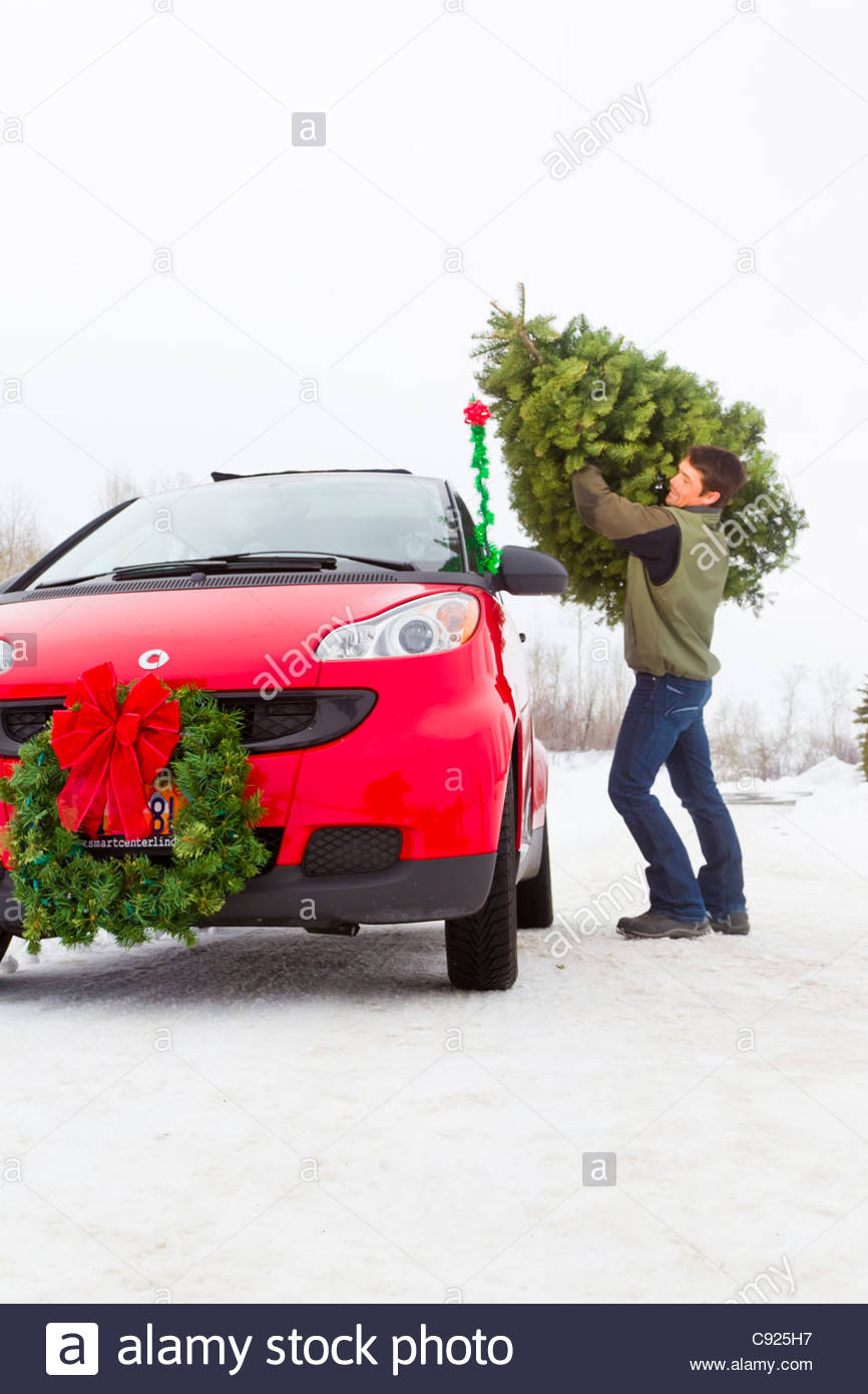 Man Loading A Cut Christmas Tree On Top Of A Red Smart Car  - Christmas Tree On Car