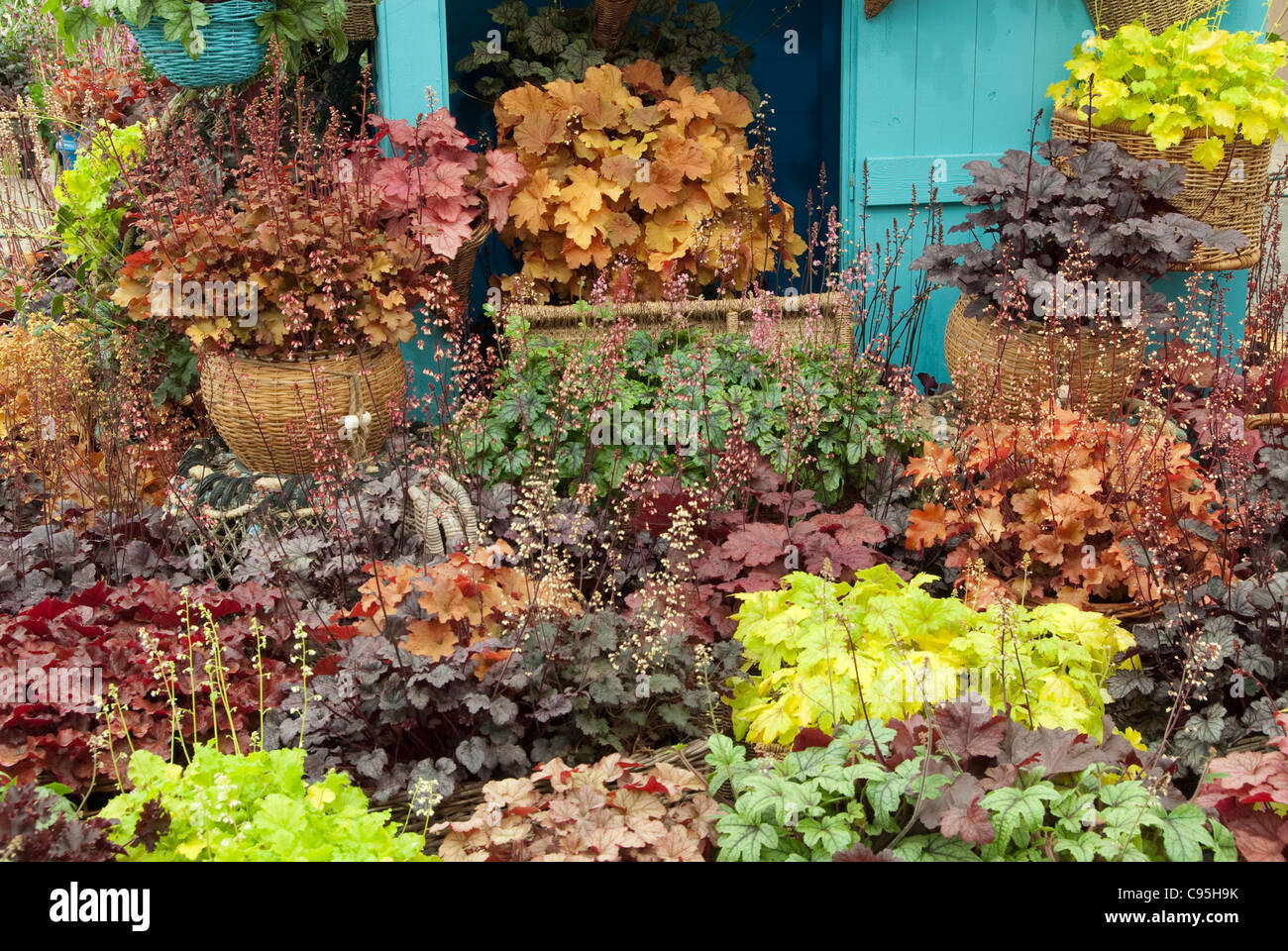 Container Garden perennial plants Heuchera mixture foliage & flowering with many kinds of cultivars & varieties shade garden